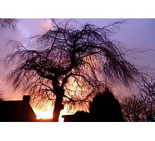 Sunset Willow Photographic Print