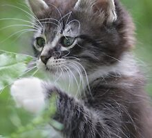 Cute Tabby Kitten Playing With Leaf by TheCurators