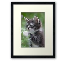 Cute Tabby Kitten Playing With Leaf Framed Print