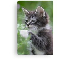 Cute Tabby Kitten Playing With Leaf Canvas Print