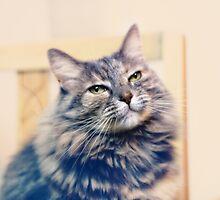 Soft kitty by Lynn Starner