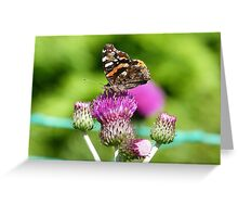 Butterfly on Thistles Greeting Card