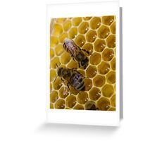 Sealing up the honeycomb Greeting Card