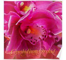 Cymbidium Delight Poster
