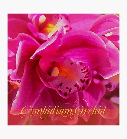 Cymbidium Delight Photographic Print