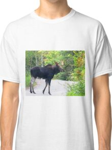 Maine Bull Moose on the road Classic T-Shirt