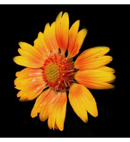Sunny Flower  Sticker