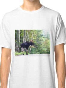 Maine bull Moose by the birches Classic T-Shirt