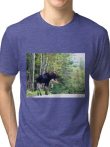 Maine bull Moose by the birches Tri-blend T-Shirt