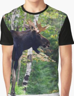 Maine bull Moose by the birches Graphic T-Shirt