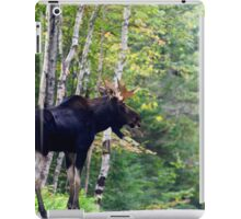 Maine bull Moose by the birches iPad Case/Skin