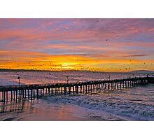 Birds at sunrise Photographic Print