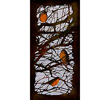 Spring Robins Gather Photographic Print