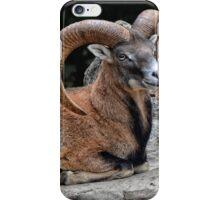 The Mouflon Ram iPhone Case/Skin