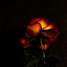 Love In (Rose) - Fractalius by Jan Clarke