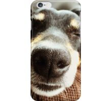 Jack Russel Nose iPhone Case/Skin