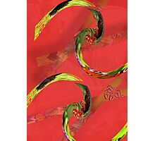 Spicy Springs Rolls Photographic Print