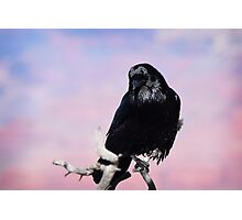 Wild Dreamer  Photographic Print