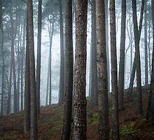 Misty forest trees - Photography. by Josh Spacagna
