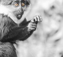 The traumatized monkey Sticker
