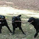 The Branch Managers by Denzil