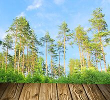 Pine forest in the summer with boards by juras