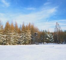 Winter pines larchs forest landscape with hunting house by juras