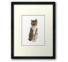 Brown cat watercolor art print painting Framed Print