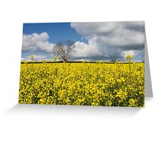 A Field of Oilseed Rape in Summer Greeting Card