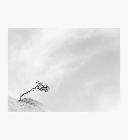 Strength - The Lone Tree Photographic Print