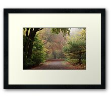 Dreamy Paths of Autumn Gold Framed Print