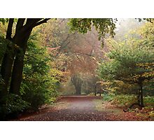 Dreamy Paths of Autumn Gold Photographic Print
