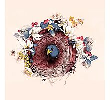 Nesting - Another Bird Has Found It's Nest Photographic Print