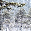 1.1.2016: Pine Tree and Snowfall II by Petri Volanen
