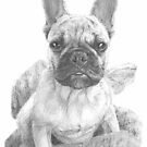 little pug nose dog drawing by Mike Theuer