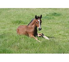 Thoroughbred Foal Photographic Print