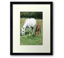 Mare and Foal Grazing Framed Print