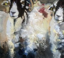 Posing Swaledales Sticker
