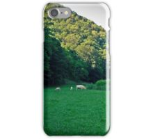 3 Cow Afternoon  iPhone Case/Skin
