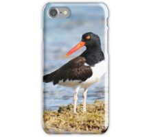 American Oyster Catcher iPhone Case/Skin