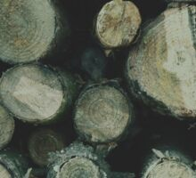 Fire wood texture. Soft hipster colors Sticker
