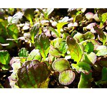 Spicy Salad Photographic Print