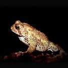 Toad in Forest by Johnny Furlotte