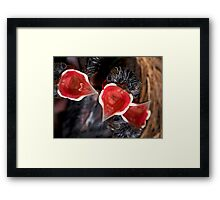 Hatched & Hungry Framed Print