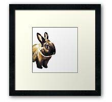 The Rabbit Framed Print