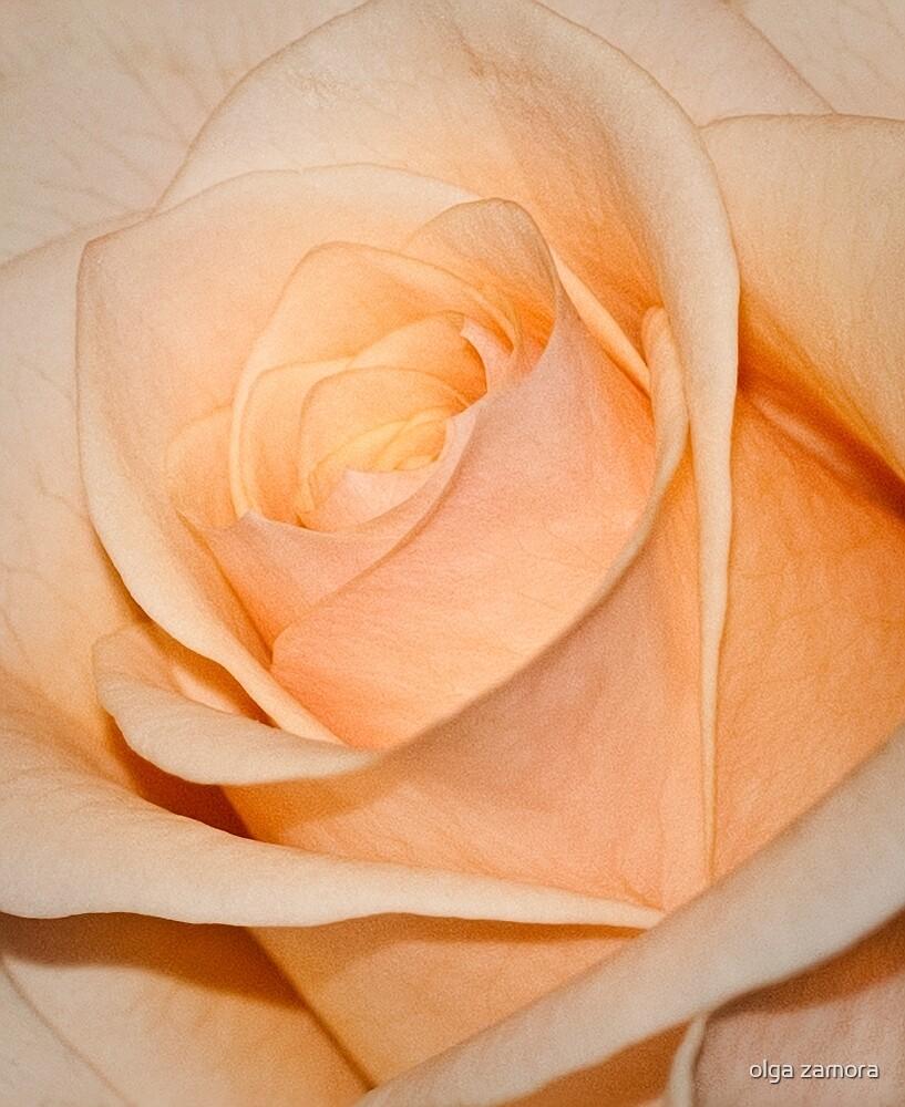 Peach Rose by olga zamora