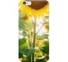 Sunflower Fields iPhone Case/Skin