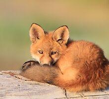 A Little Tired (Fox Kit) by akaurora