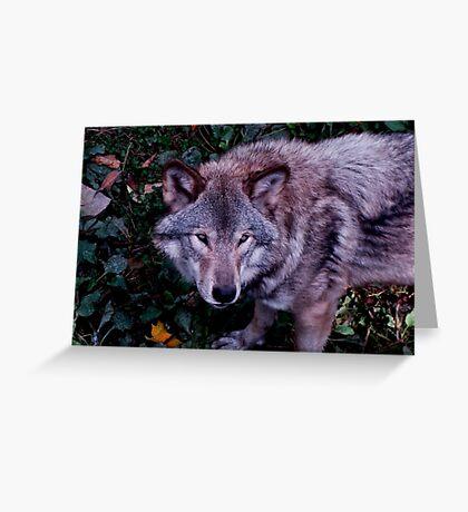 Loup Gris Greeting Card
