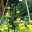 Yellowbird in the green by MarianBendeth